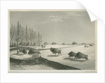 A buffalo pound, Feb. 8 1820 by Edward Francis Finden