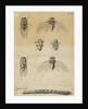 Cicadas by James Mynde