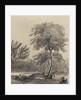 Apple tree at Woolsthorpe Manor by George Rowe