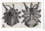 Microscopic views of a spider by Robert Hooke
