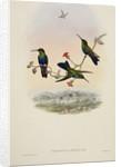 'Thalurania jelskii' by William Matthew Hart
