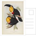 'Ramphastos ariel' by Elizabeth Gould