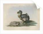 The Dodo by Anonymous