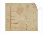 Microscopic views of duckweed and microorganisms by Antoni van Leeuwenhoek