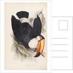 Toco Toucan by Edward Lear