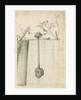 Sandy stilt puffball (Battarrea phalloides) by Frederick Polydor Nodder