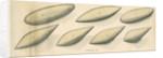 Studies of hydrodynamic shapes by Mark Beaufoy