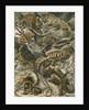 'Lacertilia' [lizards] by Adolf Giltsch