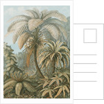 'Filicinae' [tropical ferns] by Adolf Giltsch
