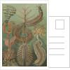 'Chaetopoda' [marine worms] by Adolf Giltsch