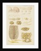 Earthworm eggs and their development by Franz Andreas Bauer