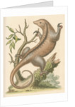 'The Little Ant-Eater' [Silky anteater ?] by George Edwards