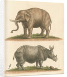 'The Elephant, and the Rhinoceros' by George Edwards