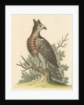'The Crowned Eagle' by George Edwards