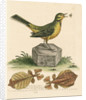 'The Yellow Water-wagtail, the Walking Leaf, &c.' by George Edwards