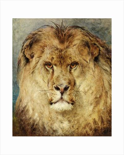A Lion's Head by Heywood Hardy