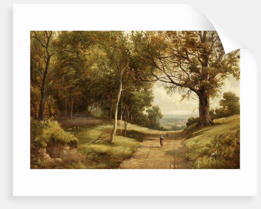 Sherwood Forest by Alfred H. Vickers
