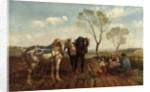 Horses by Richard Beavis