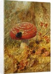 Still LIfe with Toadstool and Beetle by Anonymous