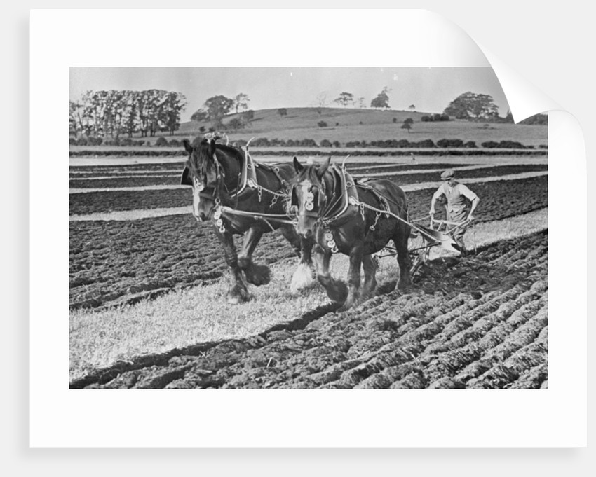 Competition ploughing, Snelston, Derbyshire by McCann