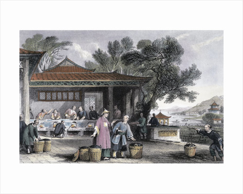 The Culture and Preparation of Tea by Thomas Allom