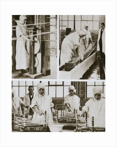 Preparing cat gut at the London Hospital's own factory by Anonymous