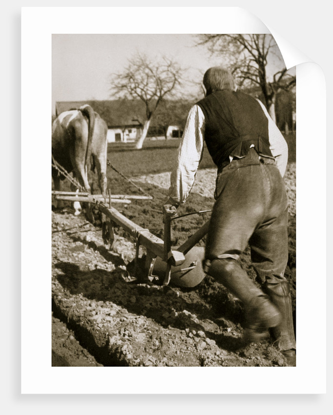 A farmer at work, ploughing a field by Anonymous