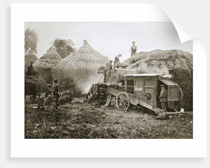 Threshing for straw for soldiers' use by Anonymous