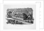 Luxury of Gardens by Humphry Repton