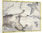 Constellation of Pegasus by Anonymous