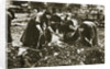 The poor of Berlin rummaging in refuse heaps by Anonymous