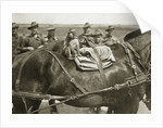 The mascot of the Anzacs by Anonymous