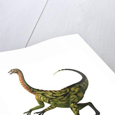 Deinocheirus, a large carnivorous dinosaur. by Corey Ford