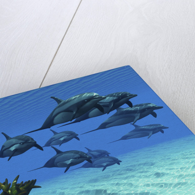 Two pennant fish scamper away from a pod of striped dolphins. by Corey Ford