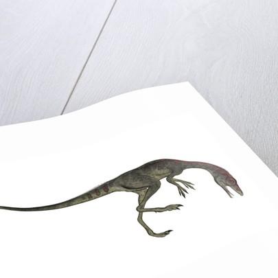 Compsognathus dinosaur. by Elena Duvernay