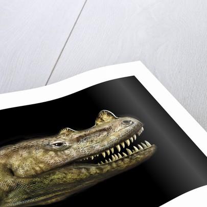 Ceratosaurus portrait. by Jan Sovak