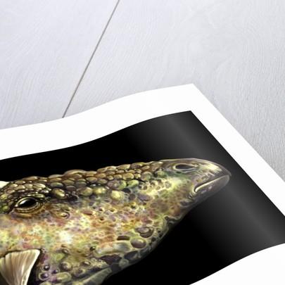 Gargoyleosaurus portrait. by Jan Sovak
