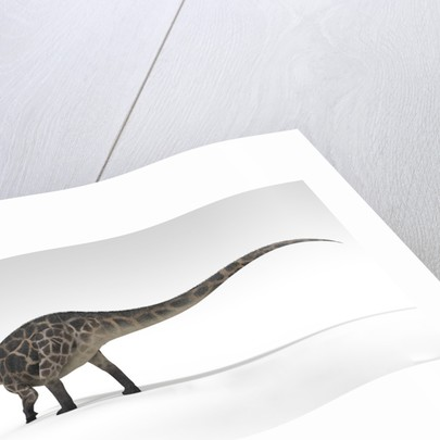 Dicraeosaurus dinosaur, white background. by Kostyantyn Ivanyshen