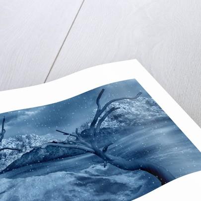 Artist's concept of a dangerous snow covered landscape. by Mark Stevenson