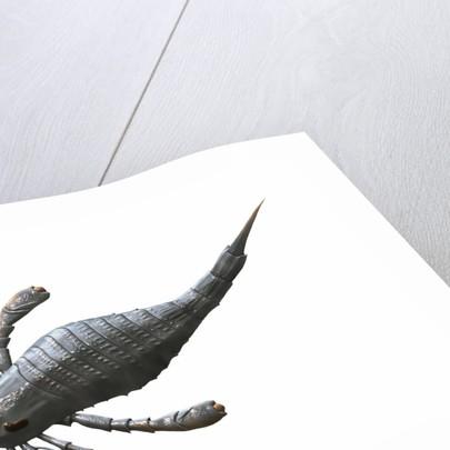 Eurypterus tetragonophthalmus, Silurian of Europe. by Nobumichi Tamura