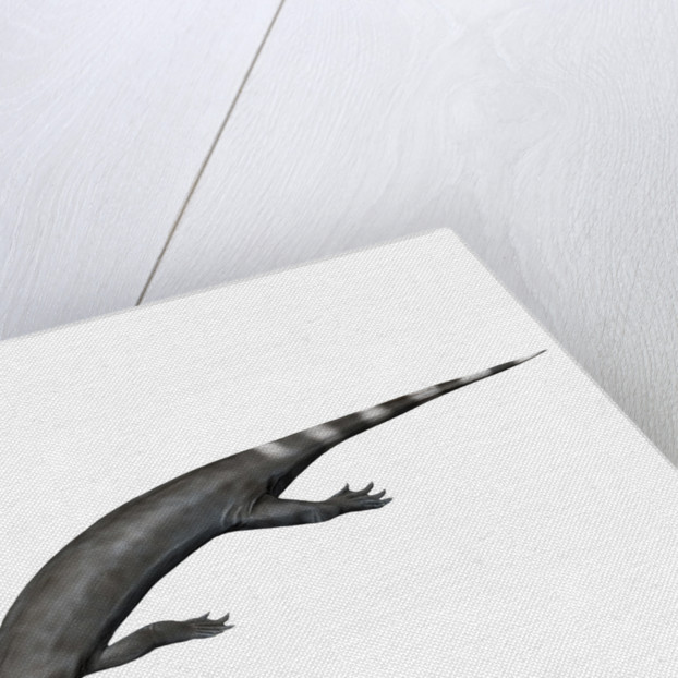 Corosaurus alcovensis, Early Triassic of Wyoming, USA. by Nobumichi Tamura