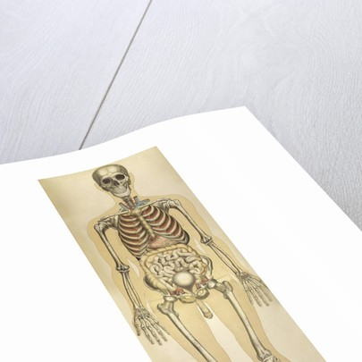 The human body with superimposed colored plates by Julien Bougle. by Anonymous