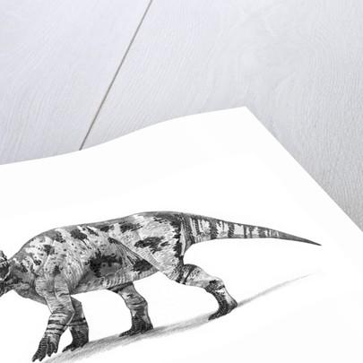 Centrosaurus apertus dinosaur of the Late Cretaceous Period. by Roman Garcia Mora