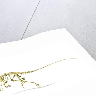 3D rendering of a Velociraptor dinosaur skeleton. by Leonello Calvetti