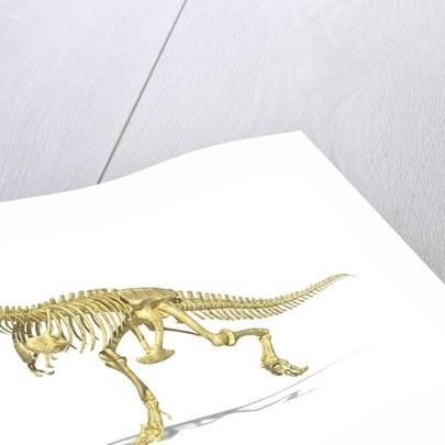 3D rendering of a Tyrannosaurus Rex dinosaur skeleton. by Leonello Calvetti