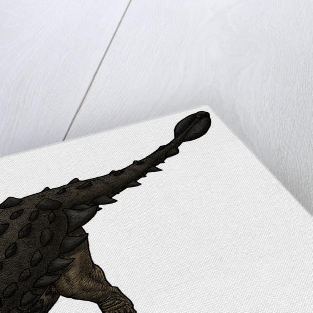 Saichania, a Mongolian ankylosaurid from the Cretaceous Period. by Vitor Silva