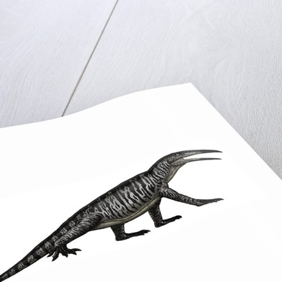 Teraterpeton, an archosauromorph from the late Triassic. by Vitor Silva