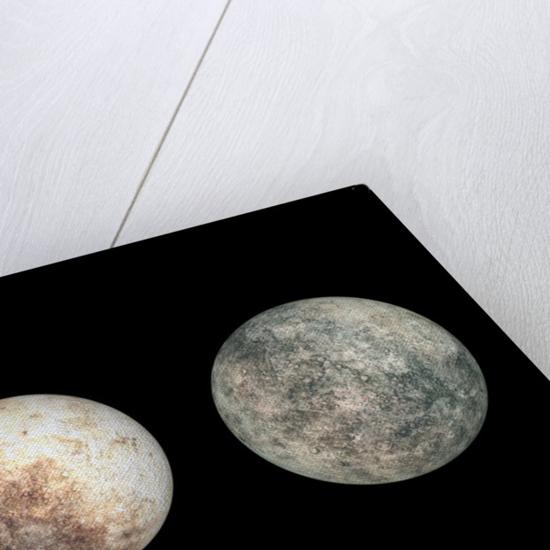 Dwarf planets Ceres, Pluto, and Eris. by Walter Myers
