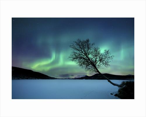Aurora Borealis over Sandvannet Lake in Troms County, Norway. by Arild Heitmann