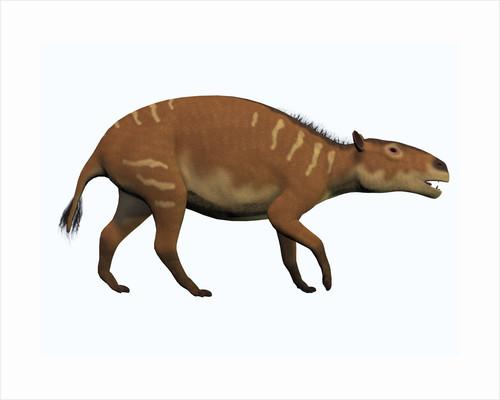 Eurohippus, an extinct ancestor of the modern horse. by Corey Ford